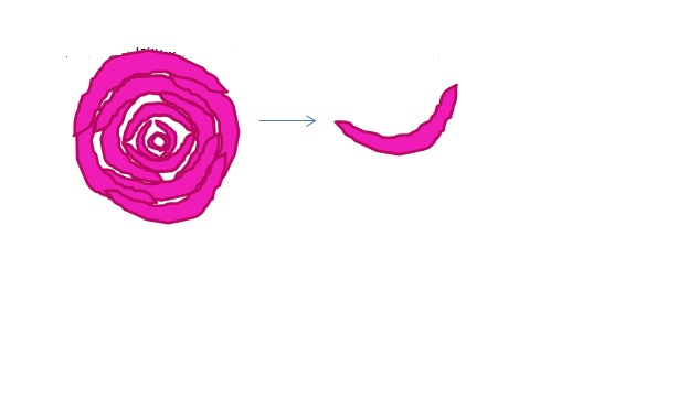 rosela